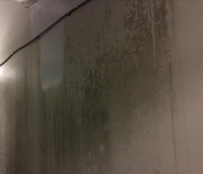 We can assist you, with your mold infestation. Before